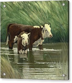 Acrylic Print featuring the painting Heffers In The Pond by John Reynolds