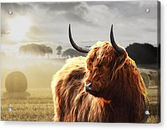 Heilan Coo On Fire Acrylic Print
