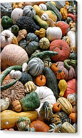 Heirloom Squash Tower V. Acrylic Print by Vinnie Oakes