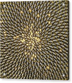 Helianthus Sunflower Seeds Close Up Acrylic Print by Mark Sykes
