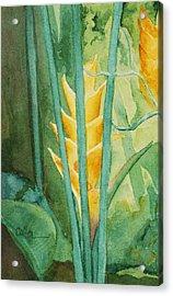 Heliconia Acrylic Print