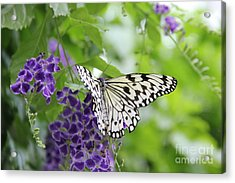 Hello Beauty Acrylic Print
