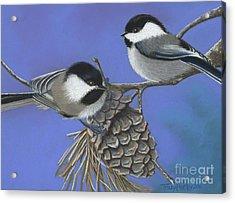 Hello Chickadees Acrylic Print by Tracy L Teeter