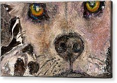 Hello Dog Acrylic Print