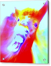 Hello Goodbye I Don't Know Why  Acrylic Print by Hilde Widerberg