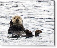 Hello Otter Acrylic Print by Saya Studios