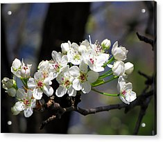 Acrylic Print featuring the photograph Hello Spring by Greg Simmons