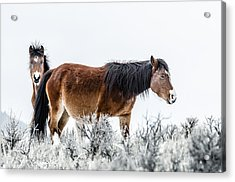 Hello Acrylic Print by Yeates Photography