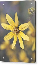 Hello Yellow Acrylic Print by Faith Simbeck