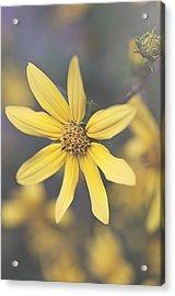 Hello Yellow Acrylic Print