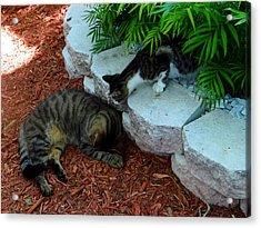 Hemingway Cats Acrylic Print