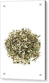 Hemlock Bark Herb Acrylic Print by Geoff Kidd/science Photo Library