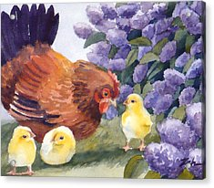 Hen And Chicks Chicken Art Acrylic Print