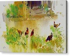 Hen Pecked Acrylic Print
