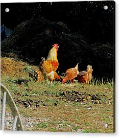 Henry And His Girls Acrylic Print by Carol Hoffman