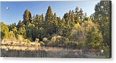 Henry Cowell Redwoods Panorama Acrylic Print by Larry Darnell