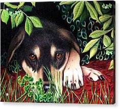 Acrylic Print featuring the drawing Henry by Danielle R T Haney