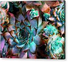 Hens And Chicks Series - Verdigris Acrylic Print by Moon Stumpp