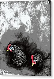 Hens At Rest Acrylic Print by George Pedro