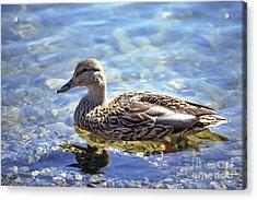 Hen's Reflection Acrylic Print