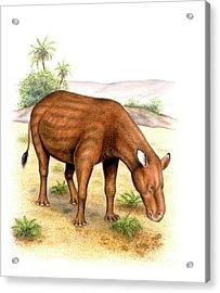 Heptodon Prehistoric Mammal Acrylic Print