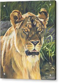 Her - Lioness Acrylic Print