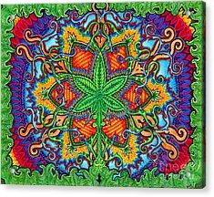 Herbal Cure Acrylic Print