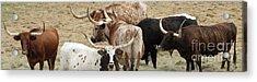Herd Instinct Acrylic Print by Joe Jake Pratt