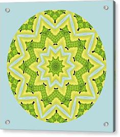 Here Birdie Birdie Mandala Acrylic Print