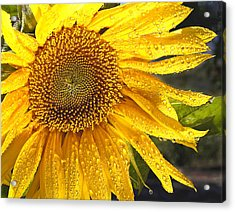 Here Comes The Sun Acrylic Print by Jean Noren