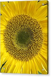 Here Comes The Sun.... Acrylic Print