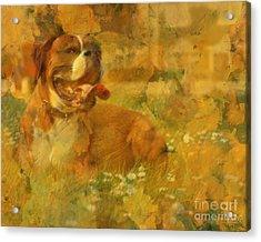 Here Doggie Acrylic Print