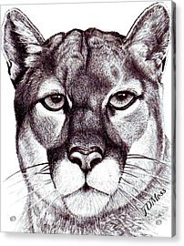 Here Kitty Kitty Acrylic Print by Janet Moss