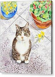 Here Kitty Kitty Kitty Acrylic Print by Irina Sztukowski
