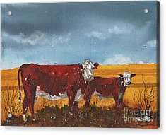 Hereford Cow And Calf Acrylic Print by Tim Oliver