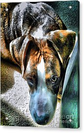 Acrylic Print featuring the photograph Here's Lookin Atchya by Robert McCubbin