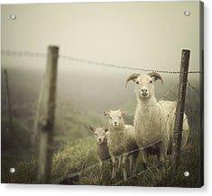 Here's Looking At Ewe Acrylic Print by Irene Suchocki