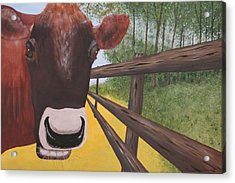 Here's Looking At Moo Acrylic Print by Tim Townsend