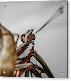Acrylic Print featuring the photograph Here's Looking At You Squared by TK Goforth