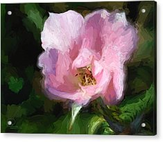 Heritage Rose Acrylic Print