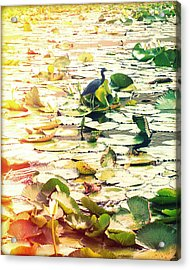 Heron Among Lillies Photography Light Leaks Acrylic Print