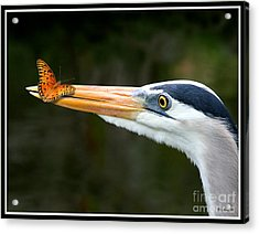 Acrylic Print featuring the photograph Heron And Butterfly by Mariarosa Rockefeller