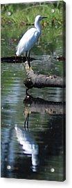 Heron And Reflection Acrylic Print