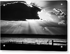 Acrylic Print featuring the photograph Heron And  The Cloudburst by Michael Thomas