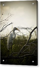 Heron At Dusk Acrylic Print by Bradley R Youngberg
