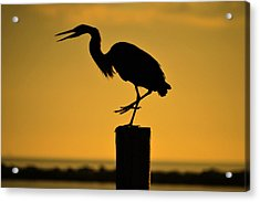 Heron At Sunrise Acrylic Print by Leticia Latocki