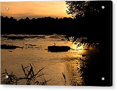 Acrylic Print featuring the photograph Heron At Sunset by Andy Lawless