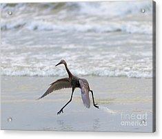 Heron Ballet Acrylic Print