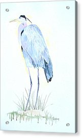 Heron Acrylic Print by Christine Lathrop