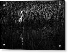 Acrylic Print featuring the photograph Heron by David Isaacson